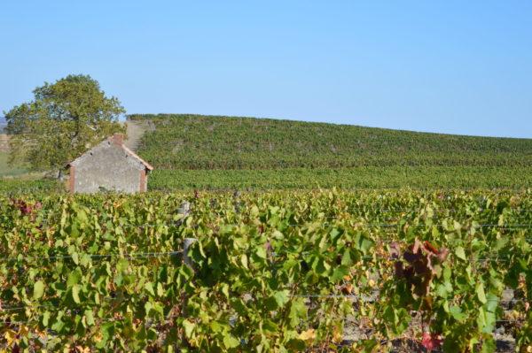 Au cœur du vignoble © OT Val de Sioule
