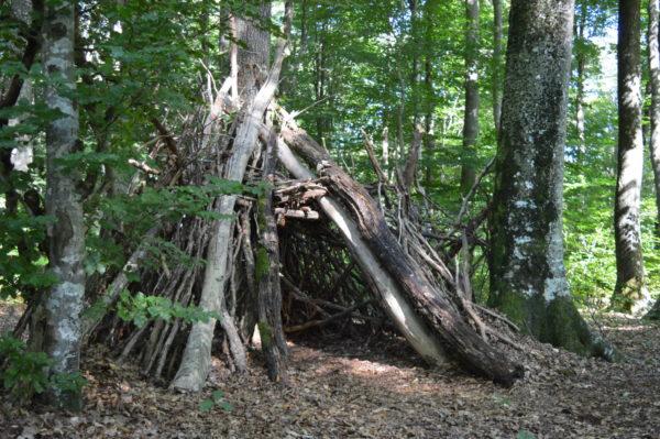 Forêt des Colettes © OT Val de Sioule