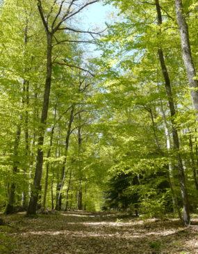 Forêt des Colettes © PIT Bellenaves