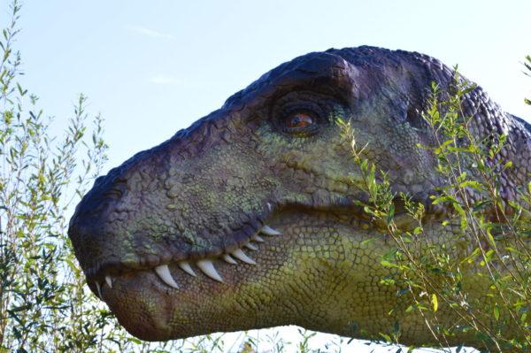 La Colline aux dinosaures © Paléopolis