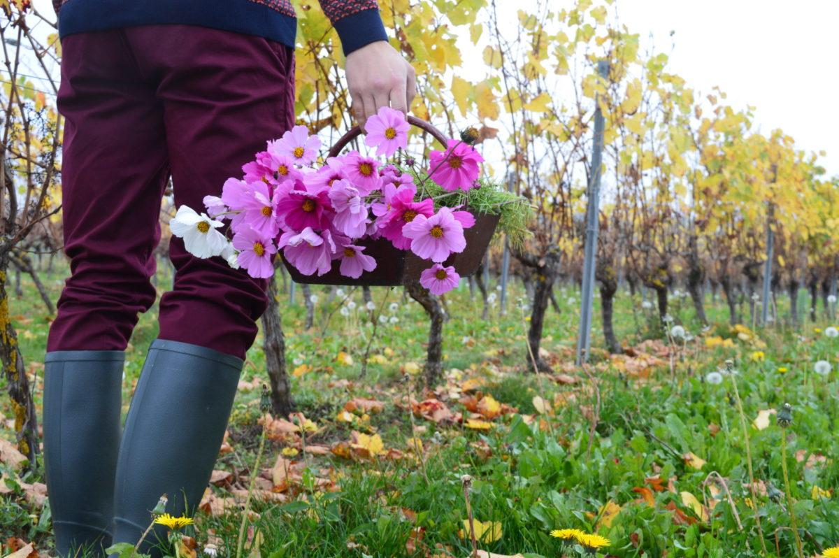 Vignoble de Saint-Pourçain © OT Val de Sioule